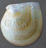 1pc Mother of Pearl shells polished 160 - 190mm