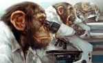 WISE MONKEY *BULK CLEARANCE* - LIMITED TIME ONLY