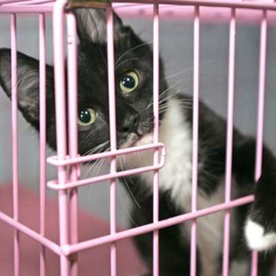 When Caging Your Cat Can Be Useful