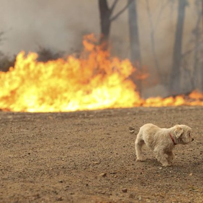 Bushfire Safety For Pets
