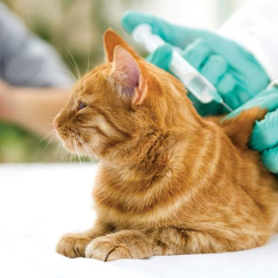 Five Vaccinations That Your Cat May Need