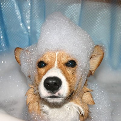 How to Give Your Dog a Stress Free Bath