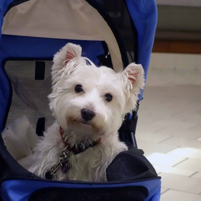 7 Reasons Why You Should Buy A Pet Stroller