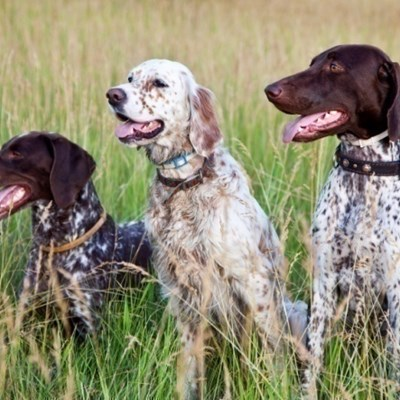 Useful Items For Sporting Dogs
