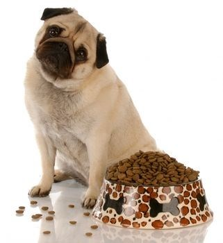 Stop Your Dog From Being A Fussy Eater Once And For All!