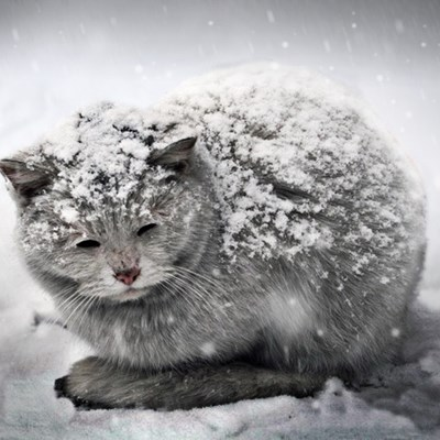 Don't Let Your Cat's Food Freeze During Cold Weather