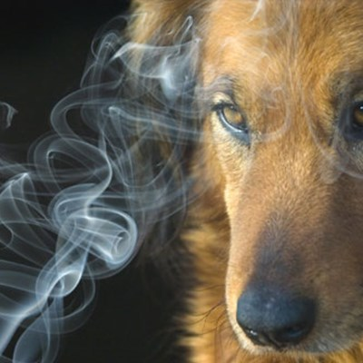 Does Smoking Affect Your Dog?