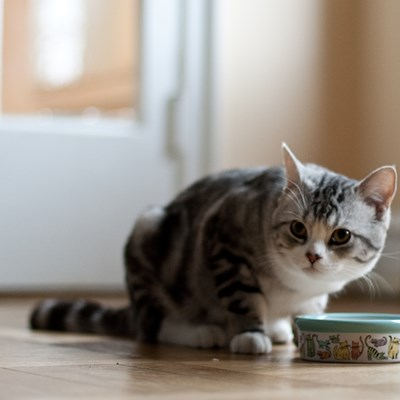 Should You Feed Your Cat Offal?
