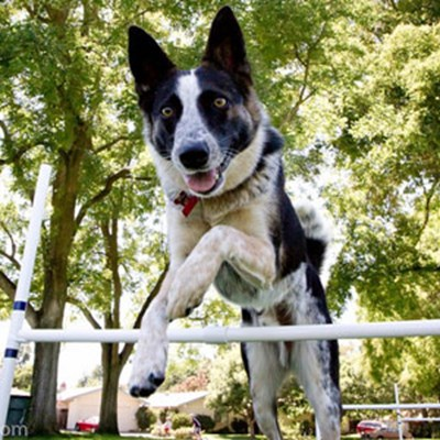 10 Reasons Why Agility Training Is So Beneficial For Your Dog