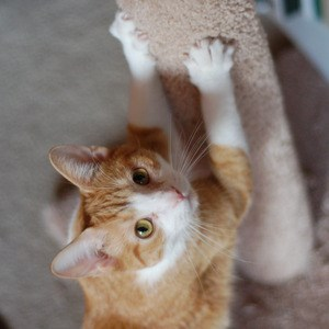Why Scratching Posts Are Important