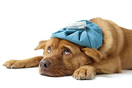 Dog Flu - Tips for Protecting Your Dog From Illness