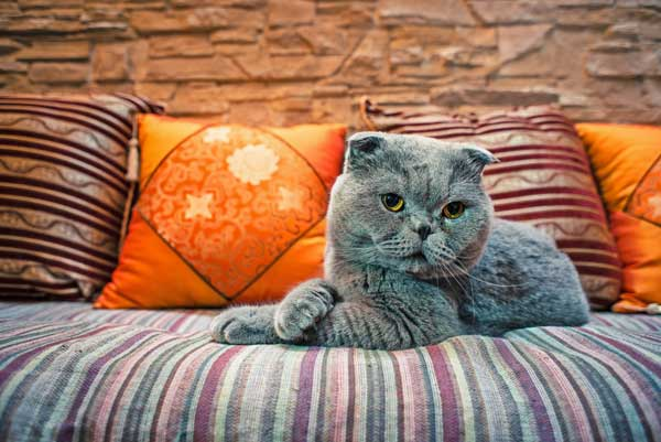 4 Ways To Choose The Perfect Cat Sitter