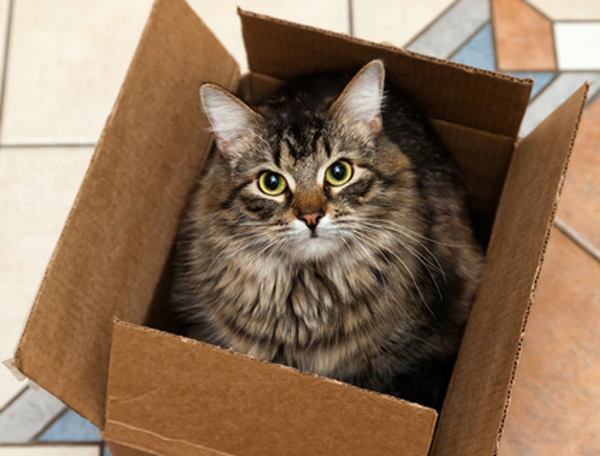 Move House with Your Cat – Stress Free!