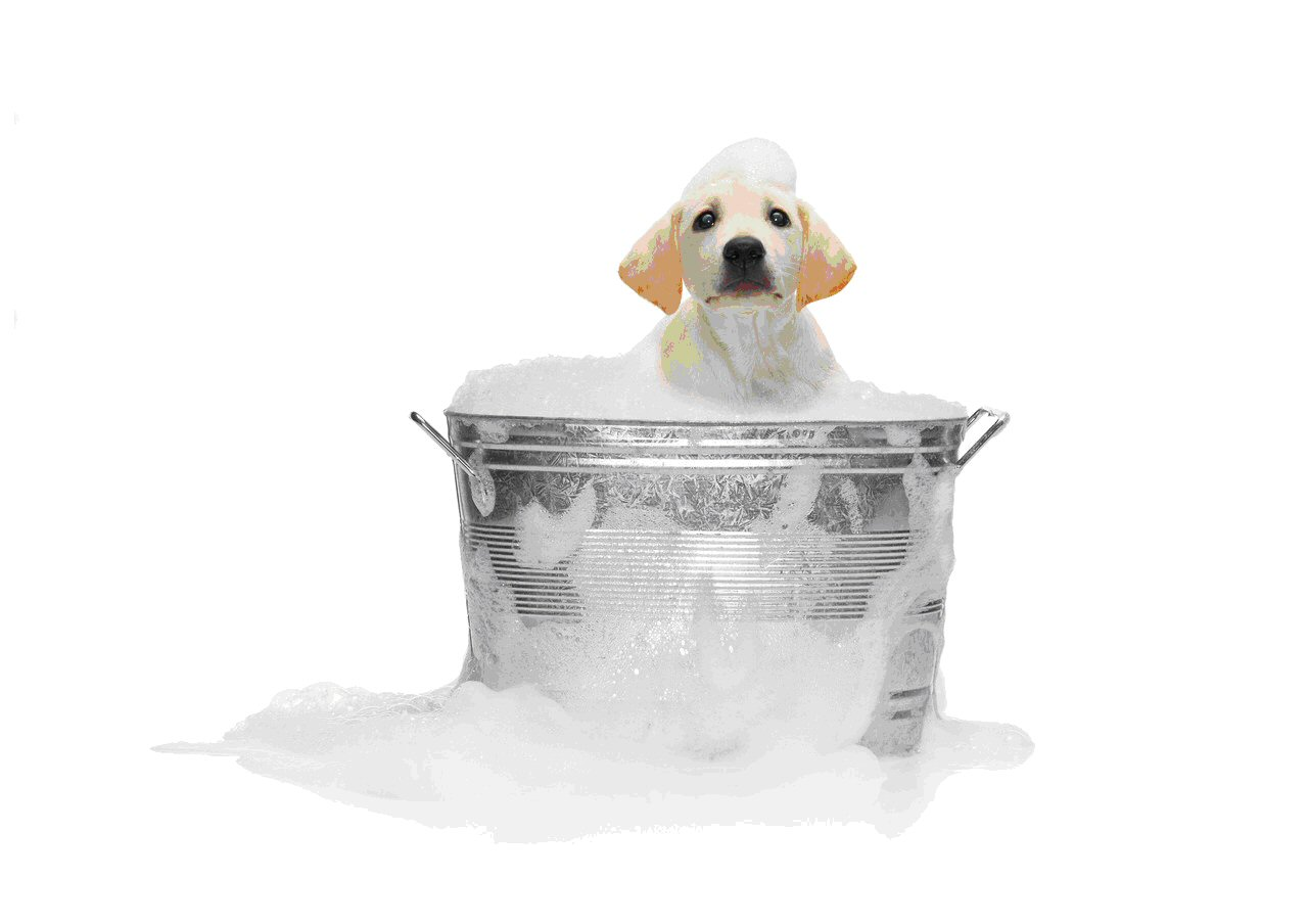 14 Dogs Who Think Bath Time Is Paw-some
