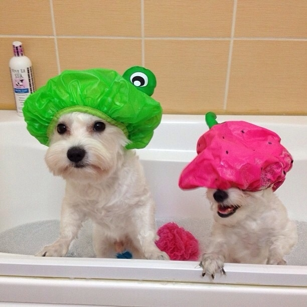 9 Handy Grooming Solutions For Your Dog