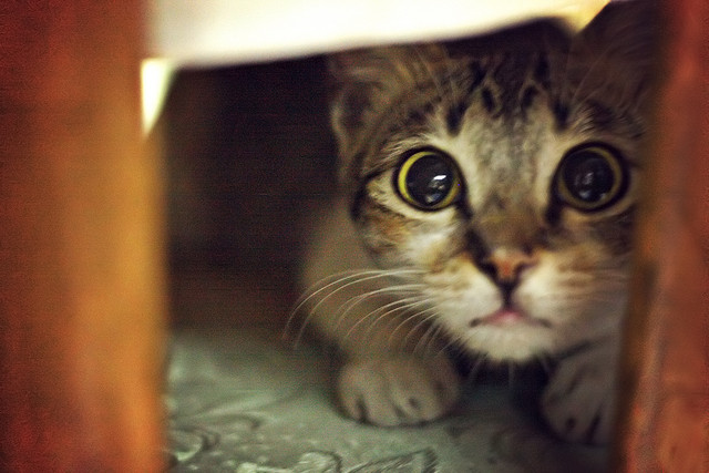 3 Thoughtful Ways To Help A Scaredy Cat