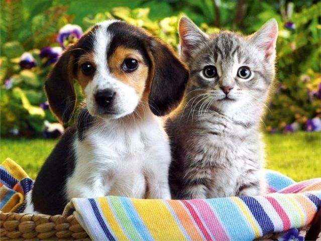 A House Divided Cannot Stand Cats And Dogs Living Together