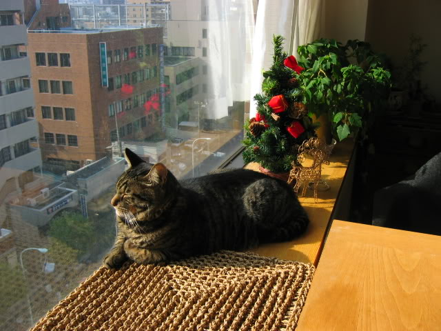 What Apartment Dwellers Need For Their Cats
