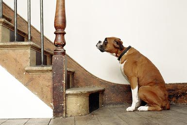 How To Help Your Dog Overcome Their Fear Of Stairs