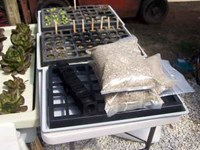 Seedling Raising System