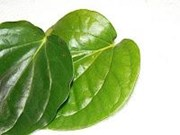 BETEEL LEAVES PAAN ( FRESH )