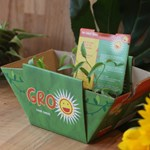 Grow Your Own Sunflowers Gro' pot Set