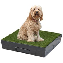 Mini Wee Pet Loo - the Dog Toilet for Smaller Dogs - now only $279.95!