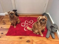 Dirty Dog Doormat, available in 4 colours and 4 sizes.  BUY NOW and Save 20%