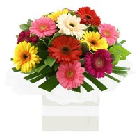 Gerberas, Arrangements From $65