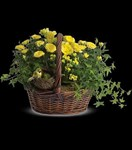 T94-1A Yellow Trio Basket