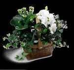 C29-2960S White Assortment Basket