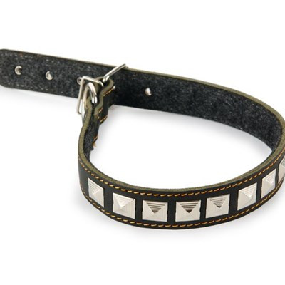 Which collar is right for my dog?