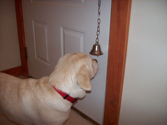 How To Train Dog To Ring Bell For Bathroom 28 Images How To Teach A Dog To Ring A Bell To Go