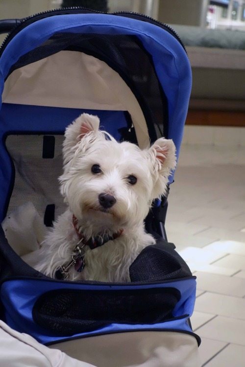 7 reasons why you should buy a pet stroller. Black Bedroom Furniture Sets. Home Design Ideas