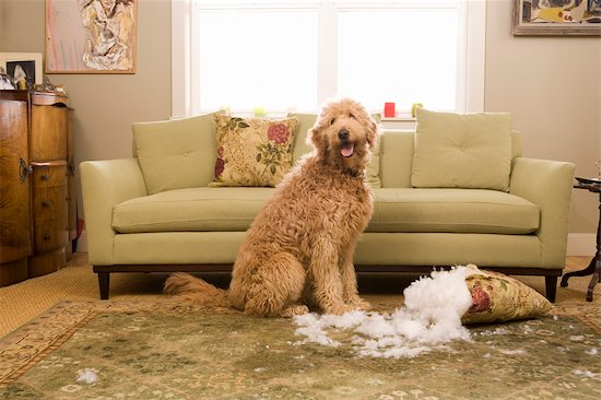 How To Prevent Your Dog From Destroying Furniture
