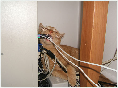 how to keep your cat from chewing cables. Black Bedroom Furniture Sets. Home Design Ideas