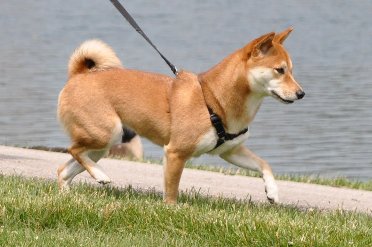 What Can Help A Dog That Can T Walk