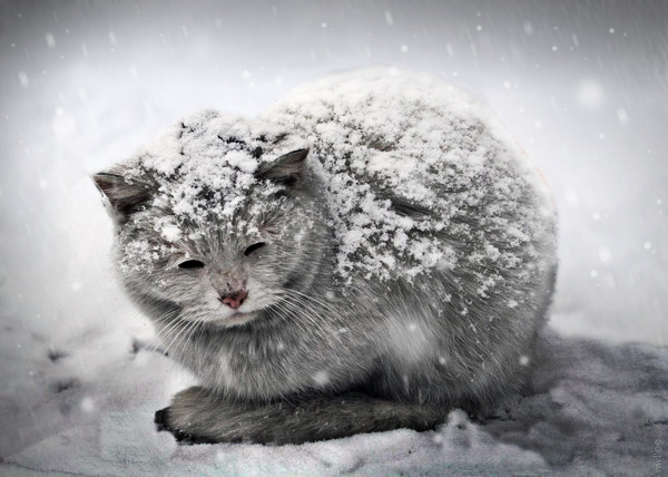 Don T Let Your Cat S Food Freeze During Cold Weather