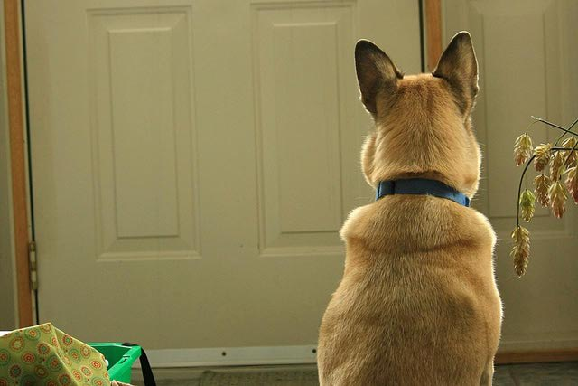 Image result for dog close the door